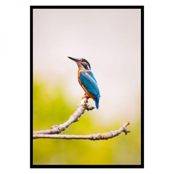 Bird-01
