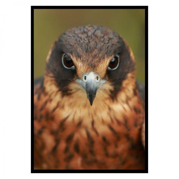 Bird-of-prey-01
