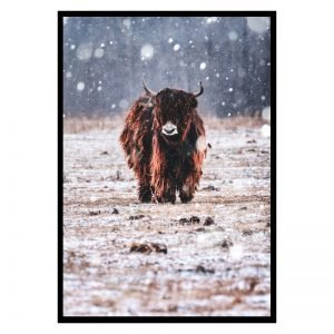Bison in the Rain poster