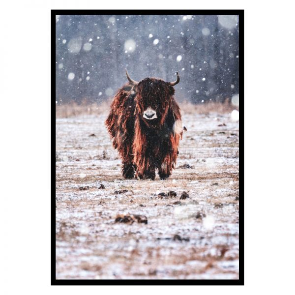 Bison-in-the-rain-01