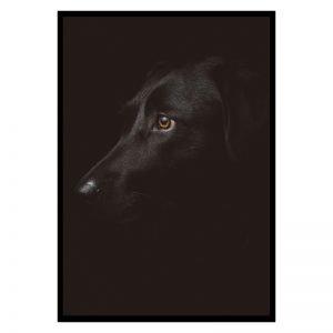 Black Dog poster