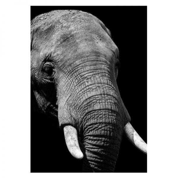 Elephant-alu-01