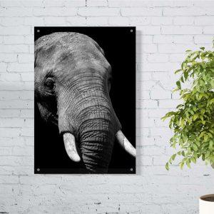 Elephant aluminium poster