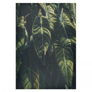 Jungle plexiglas poster