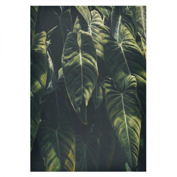 Jungle-plexi-01