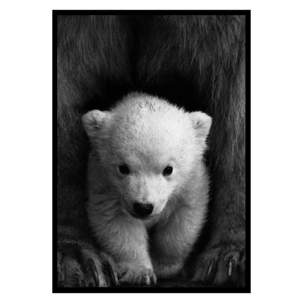 Little-polar-bear-01