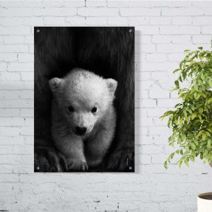Little Polar Bear aluminium poster