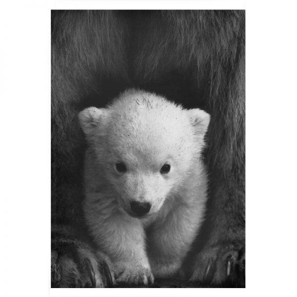 Little-polar-bear-plexi-01