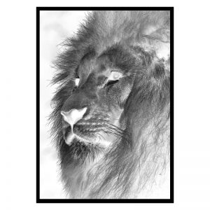 Negative Lion poster