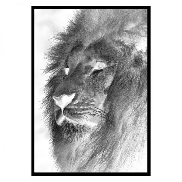 Negative-lion-01