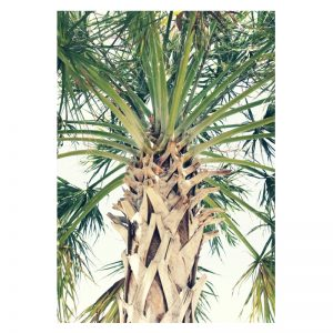 Palm Tree aluminium poster