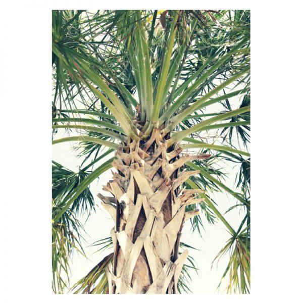 Palm-tree-alu-01