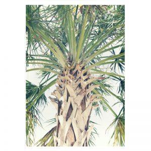 Palm Tree plexiglas poster