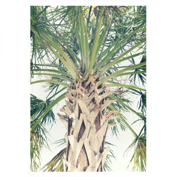 Palm-tree-plexi-01