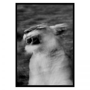 Wild Tiger poster