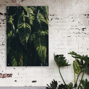 Jungle aluminium poster