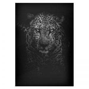 Black Panther plexiglas poster