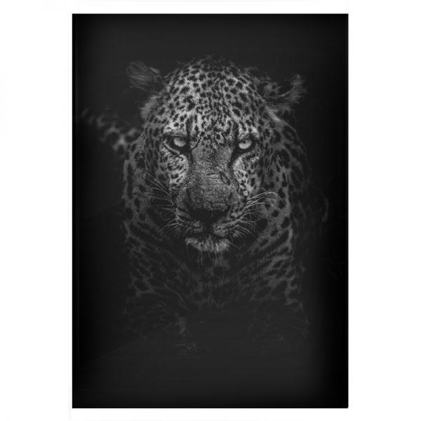 plexi-black-panther-03