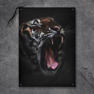 Tiger plexiglas poster