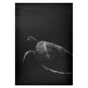 Turtle plexiglas poster