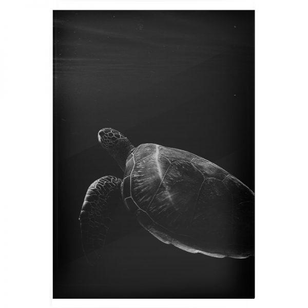 plexi-turtle-03
