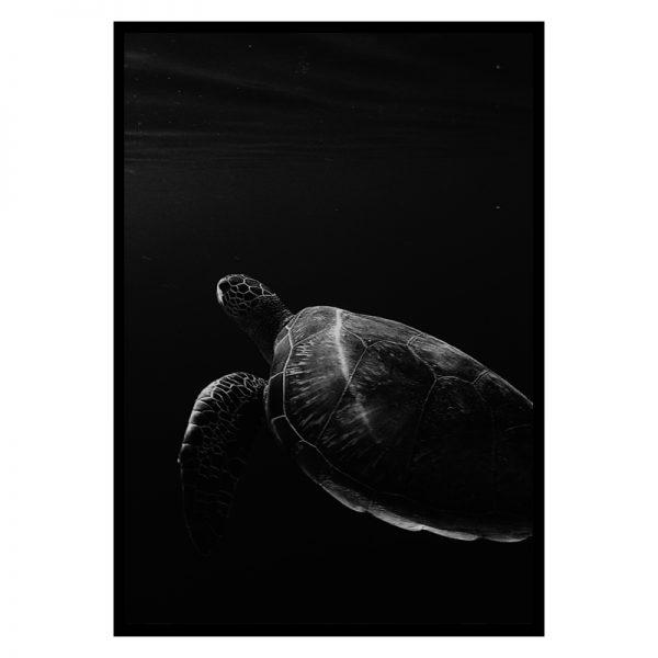 turtle-01