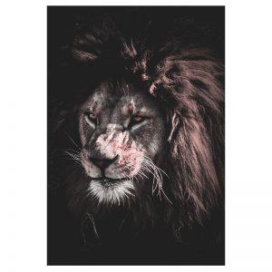 African Lion aluminium poster