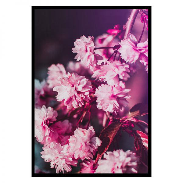 pinkflowers_01
