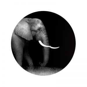 Behangcirkel - Olifant