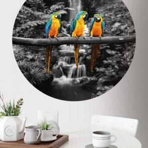 Behangcirkel - Papegaai