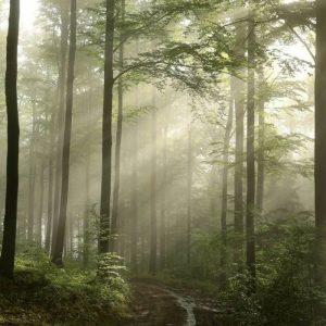 Behang - Green Forest