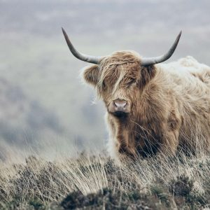 Behang - Highlander Winter
