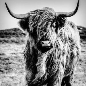 Behang - Highlander Summer