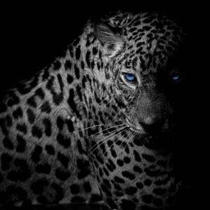 Behang - Leopard