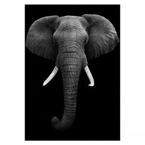 Aluminium Dibond Plexiglas Dark Elephant dieren poster