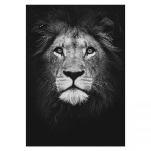 Aluminium Dibond Plexiglas Dark Lion dieren poster