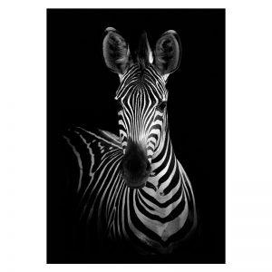 Aluminium Dibond Plexiglas Dark Zebra dieren poster