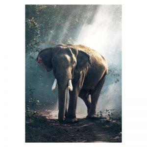 Aluminium Dibond Plexiglas Elephant Forest dieren poster