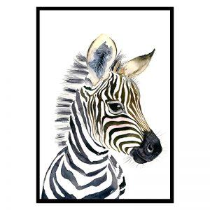 Baby Zebra kinderposter