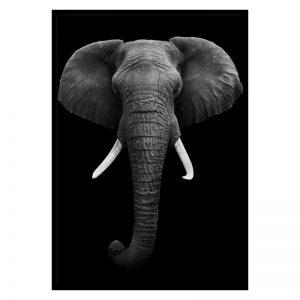 Dark Elephant dieren poster