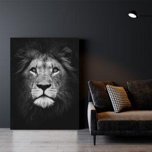 Dark Lion dieren poster