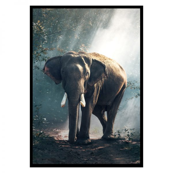 elephant-forest_01