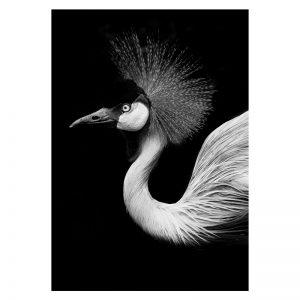 Aluminium Dibond Plexiglas Crane dieren poster
