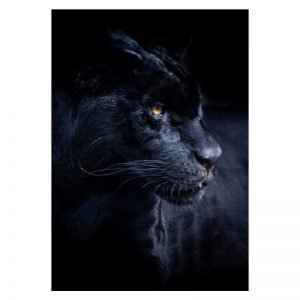 Aluminium Dibond Plexiglas Panther dieren poster