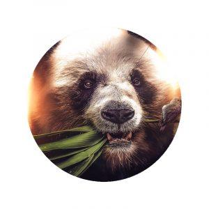 Behangcirkel - Hungry Panda
