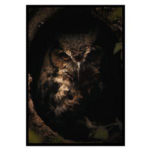 Dark Owl poster botanisch jungle dieren