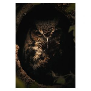 Aluminium Dibond Plexiglas Dark Owl botanische jungle dieren poster