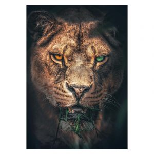 Aluminium Dibond Plexiglas Hungry Tiger botanische jungle dieren poster