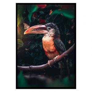 Toucan poster botanisch jungle dieren