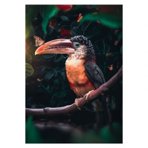 Aluminium Dibond Plexiglas Toucan botanische jungle dieren poster